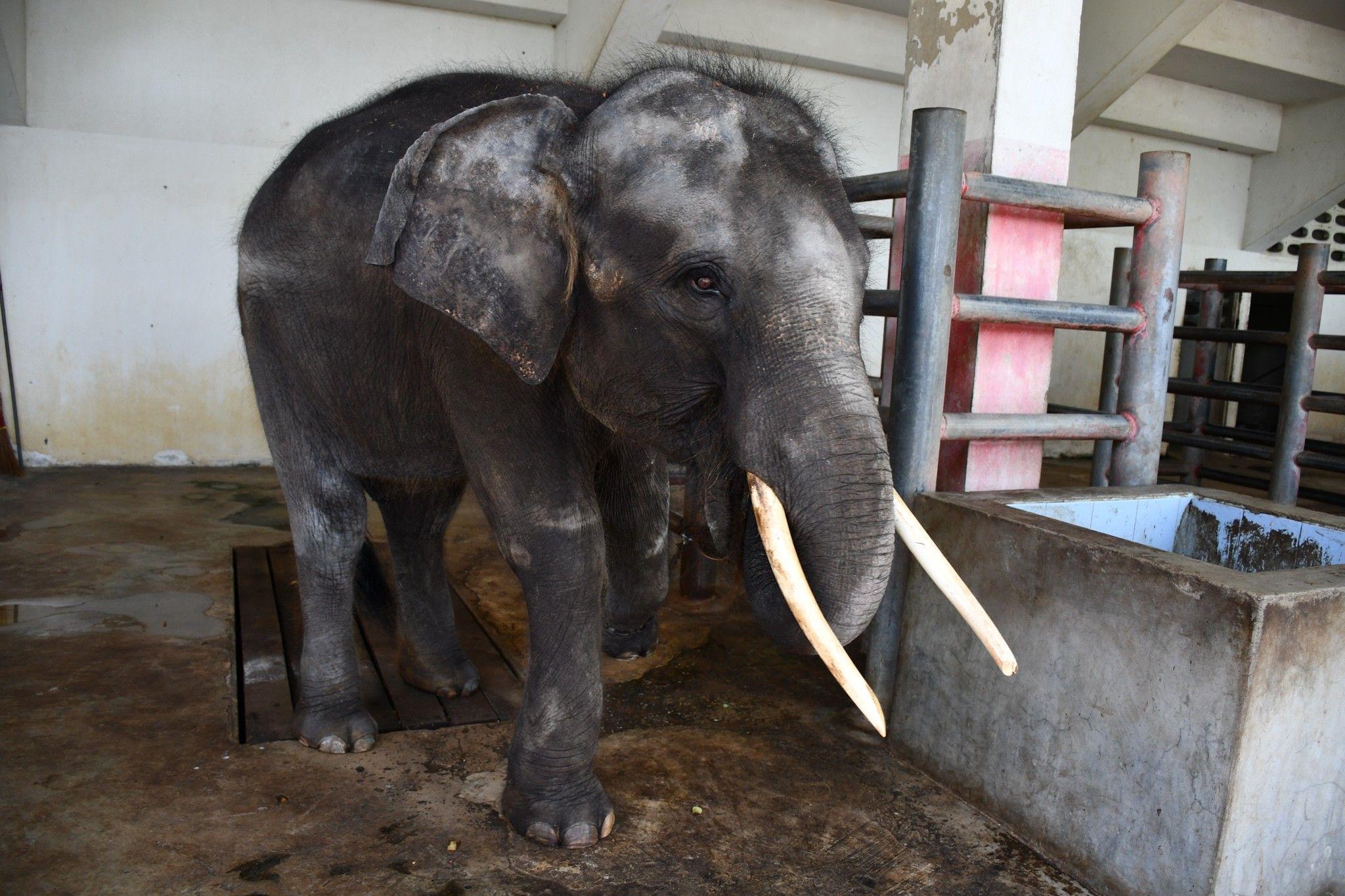 Le calvaire de cet éléphant a déclenché une vague d'indignation internationale | National Geographic