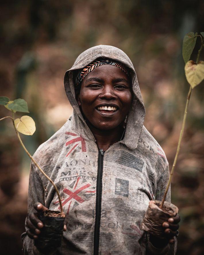 Les jeunes plants sont semés dans la forêt vivrière Kuzamura Ubuzima Lanima du Rwanda qui nécessite ...