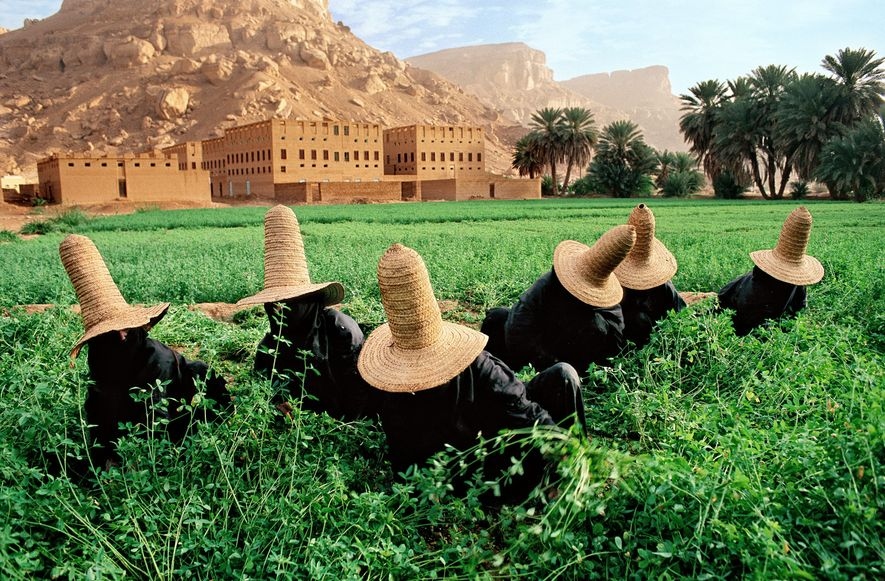 Les femmes rassemblent du trèfle à Shibam. Leurs chapeaux de paille pointus, appelés « madhalla », ...