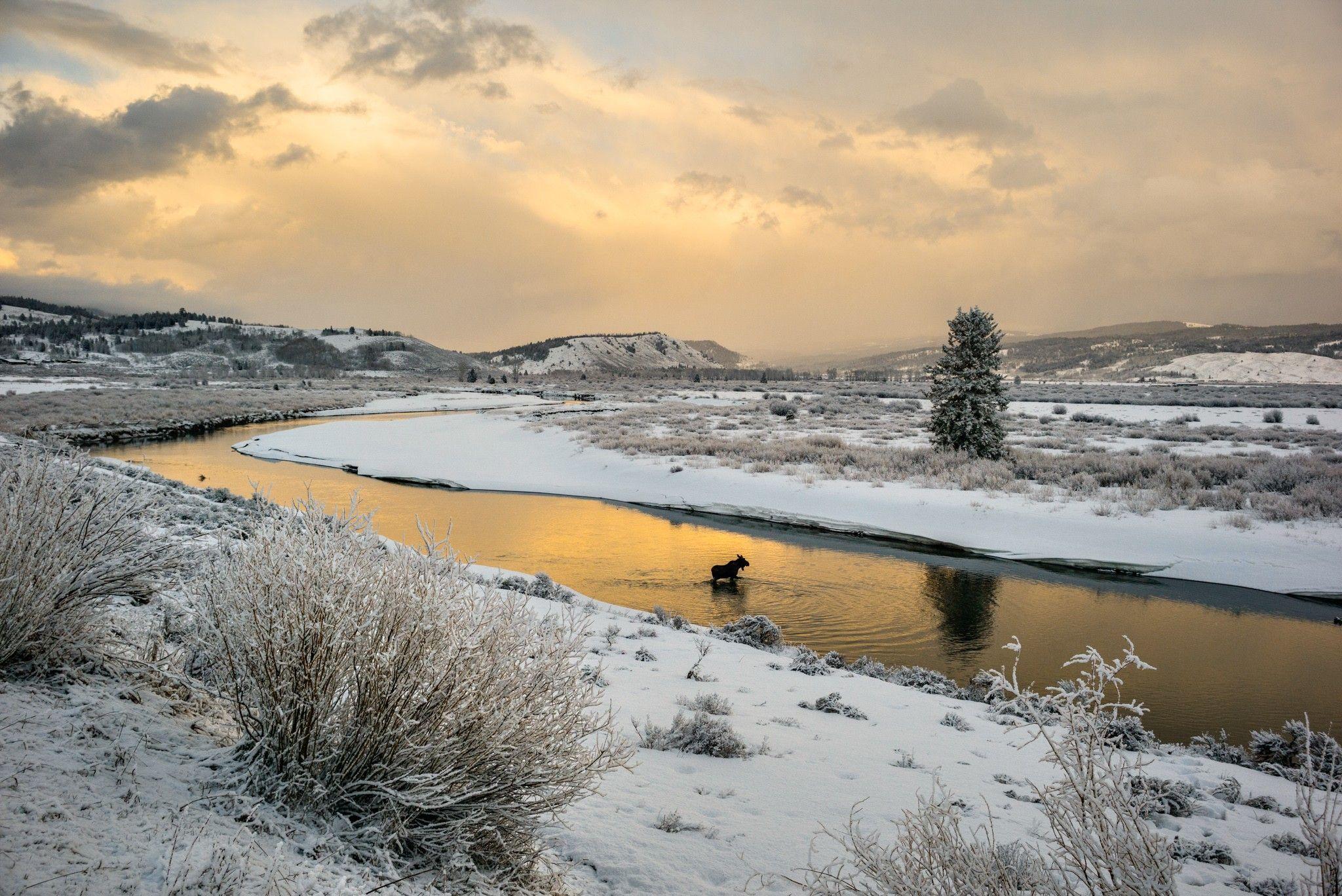 Il a neigé sur Yellowstone le premier jour de l'été | National Geographic