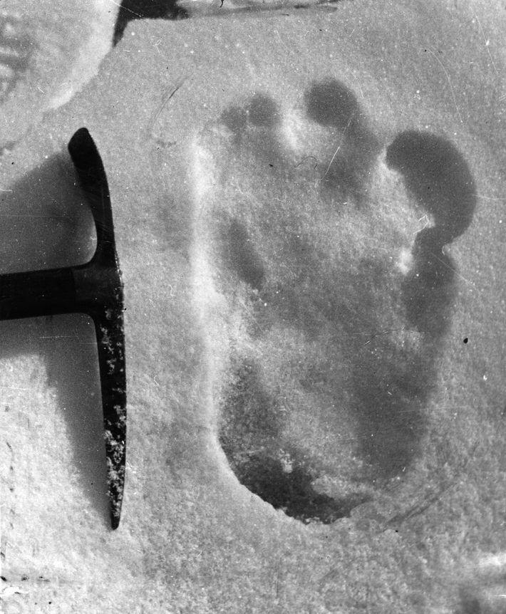 Eric Shipton a découvert cette empreinte de l'« abominable homme des neiges » en 1951 et ...