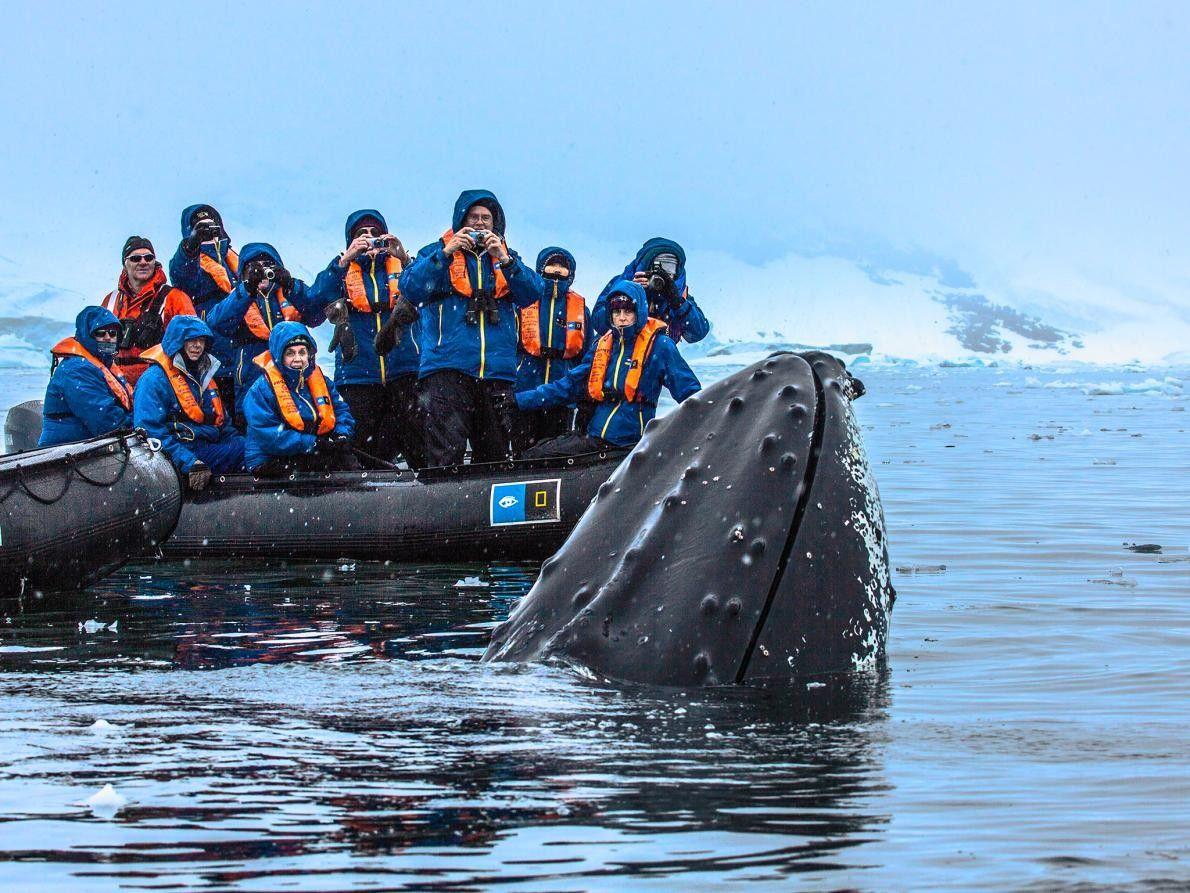 En Antarctique, une baleine remonte à la surface près d'un zodiac.