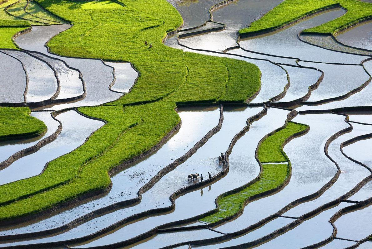 La culture en terrasse est courante dans les montagnes, comme ici au Viêt Nam, sur la ...