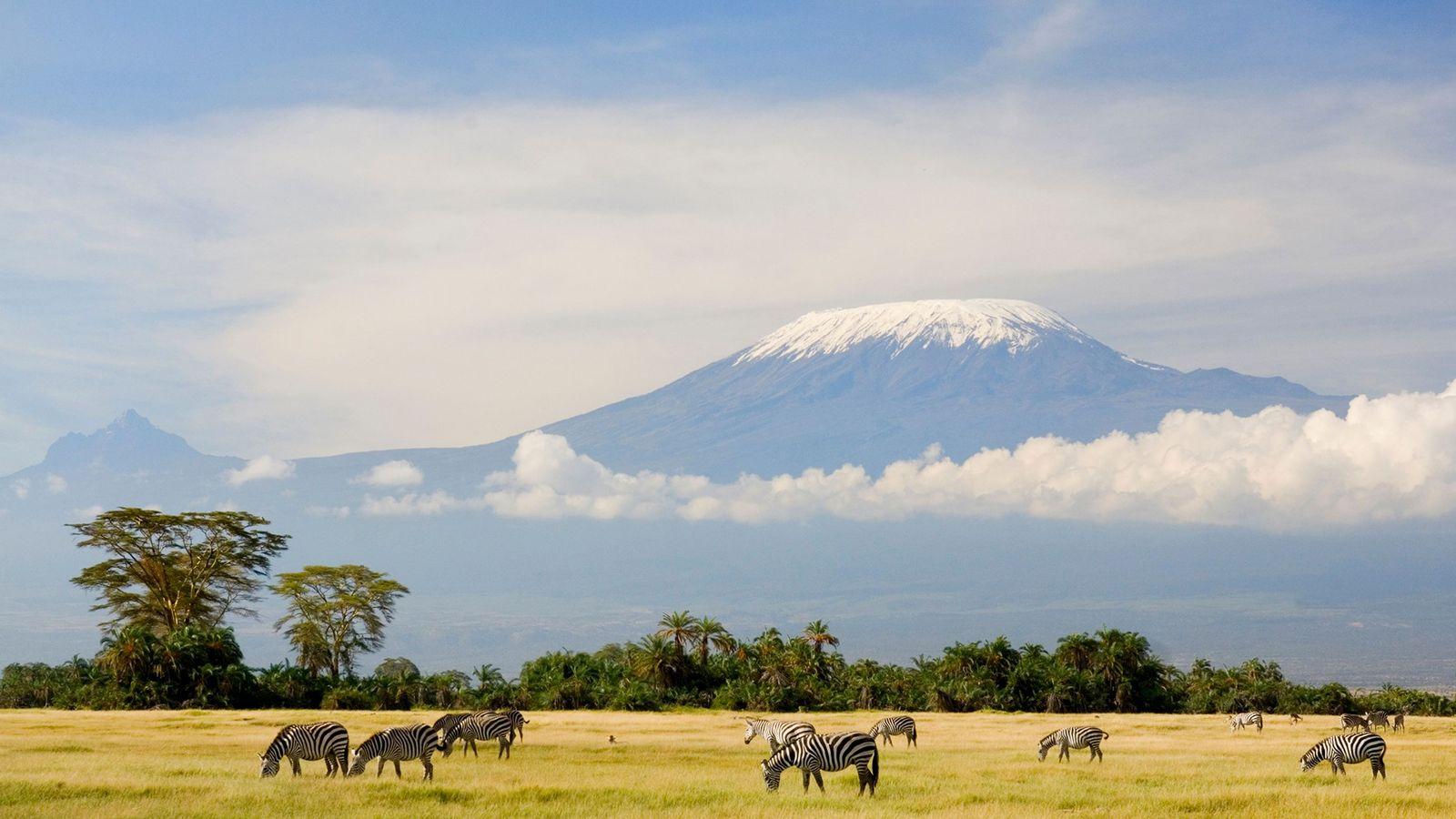 Sous le sommet de la plus haute montagne d'Afrique, le Kilimandjaro, des zèbres se nourrissent d'herbe. ...
