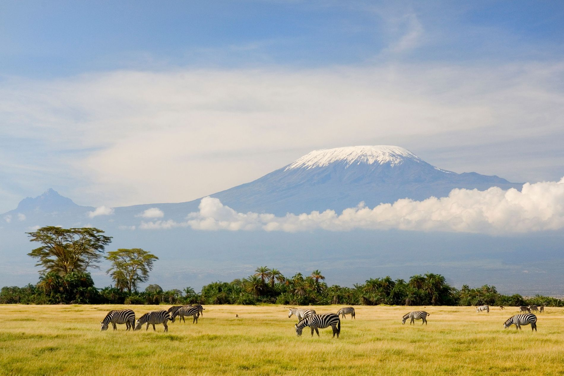 Sous le sommet de la plus haute montagne d'Afrique, le Kilimandjaro, des zèbres se nourrissent d'herbe. Ce pic impressionnant peut être atteint par la plupart des grimpeurs en trois à cinq jours.